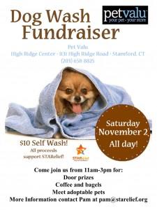 charity dog wash 2013