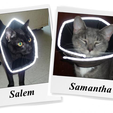 Salem & Samantha