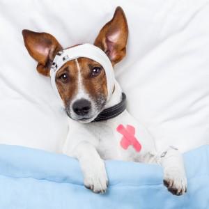 dog in hospital