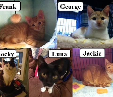 5 Kittens Find Loving Homes