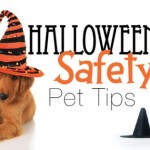 Halloween-Safety