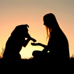 a girl is sitting outside in the grass shaking hands with her dog silhouetted against the sunset sky