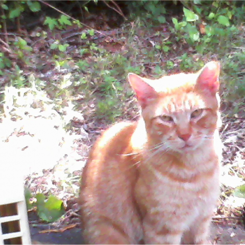 Gingie the Stray